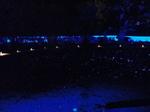 青蓮院 ライトアップ